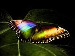 фантастика бабочки
